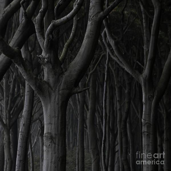 Photograph - Dark Forest by Heiko Koehrer-Wagner