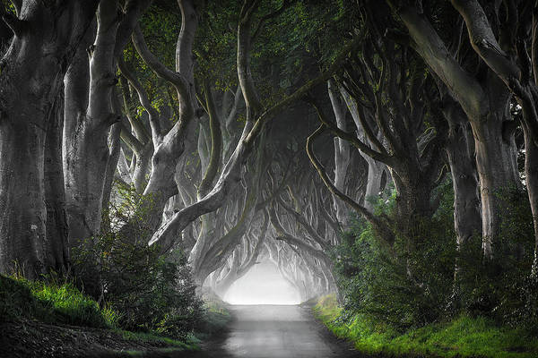 Fog Photograph - Dark Hedges by Nicola Molteni