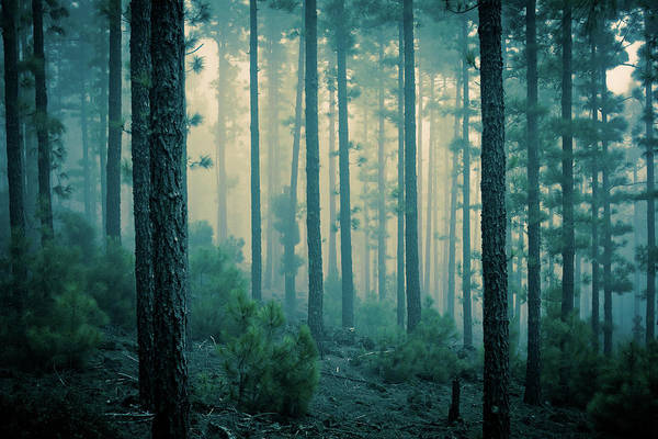 Tenerife Photograph - Dark Mystery Forest In The Fog by Zodebala