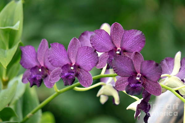 Wall Art - Photograph - Dark Purple Orchid by Eric Irion