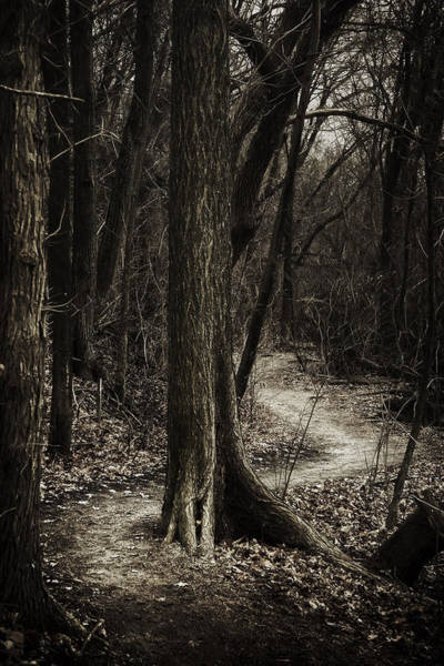 Bend Wall Art - Photograph - Dark Winding Path by Scott Norris
