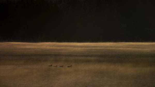 Duck Hunt Photograph - Early Birds by Aaron Bedell