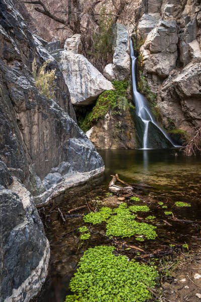 Photograph - Darwin Falls by Cat Connor