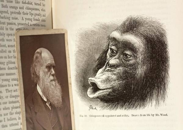 Wall Art - Photograph - Darwin On Chimpanzee Emotions by Paul D Stewart