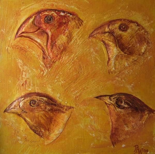 Evolution Mixed Media - Darwinian Study-01-finches by Pat Bullen-Whatling