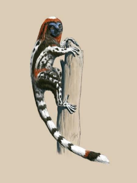 Wall Art - Photograph - Darwinius Masillae Primate by Julius T Csotonyi/science Photo Library
