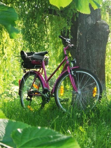 Wiese Digital Art - Das Rosa Fahrrad by Renate Hirschmair