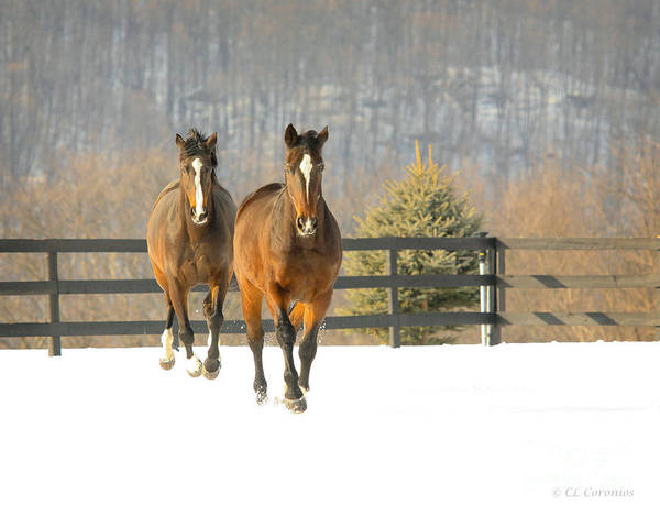 Photograph - Dashing Through The Snow by Carol Lynn Coronios