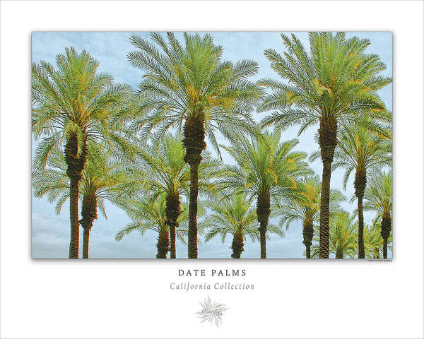 Photograph - Date Palms Art Poster - California Collection by Ben and Raisa Gertsberg