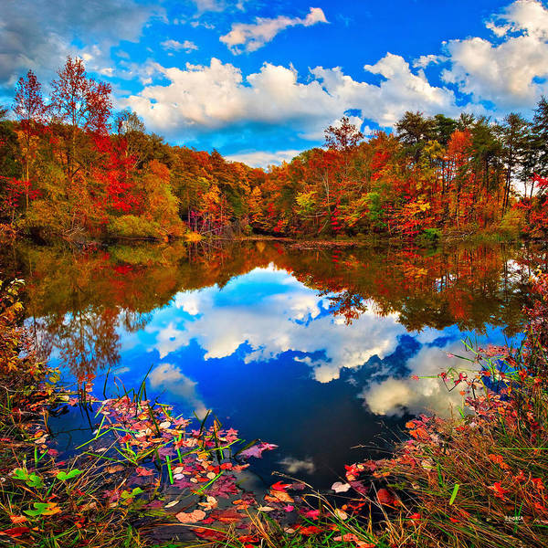 Photograph - Davis Pond Reflections by Steven Llorca