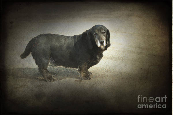 Wall Art - Photograph - Dawg by The Stone Age