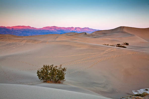 Death Valley Photograph - Dawn Dunes by Peter Tellone