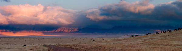 Expanse Photograph - Dawn In Ngorongoro Crater by Adam Romanowicz