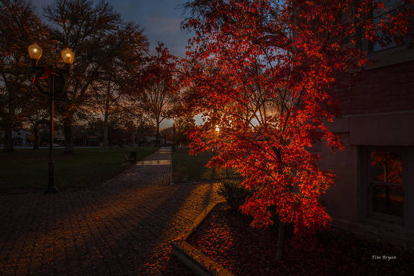 Photograph - Dawn In The Park by Tim Bryan