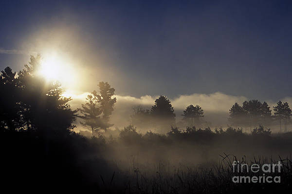 Photograph - Dawn In The Refuge by Curtis Dale