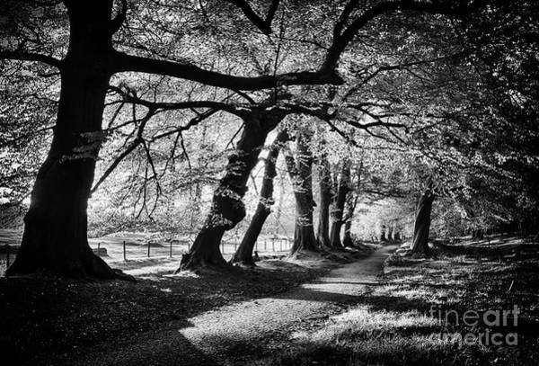 Morning Walk Wall Art - Photograph - Dawn Tree Light  by Tim Gainey