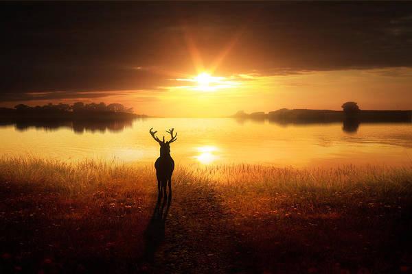 Reflections Digital Art - Dawn's Golden Light by Jennifer Woodward