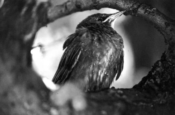 Photograph - Dax's Bird by Tarey Potter