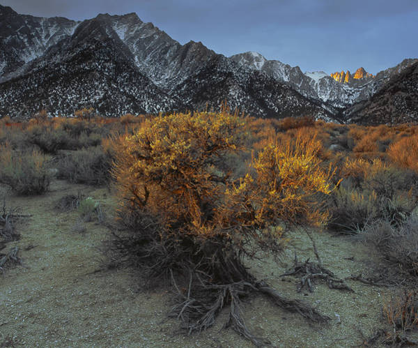 Photograph - Day Break On Mt. Whitney by Paul Breitkreuz