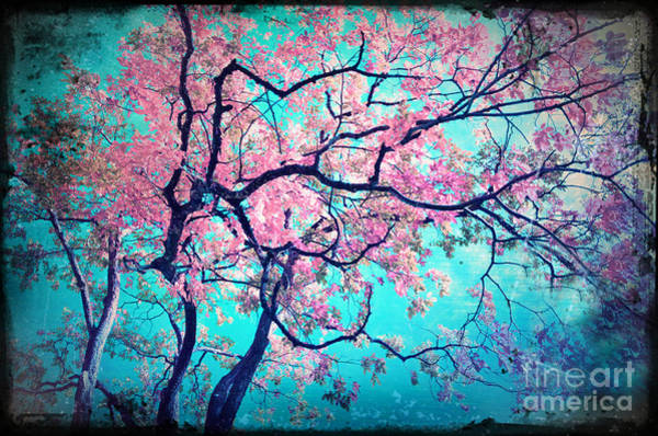 Photograph - Day Dreams In Pink by Tara Turner