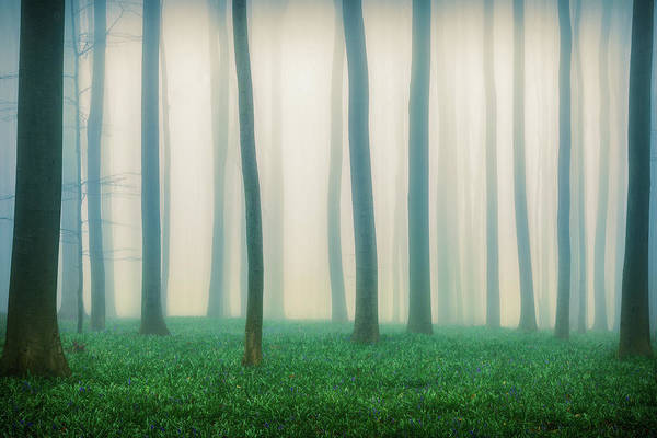 Trunks Photograph - Daydreaming Of Bluebells by Adrian Popan