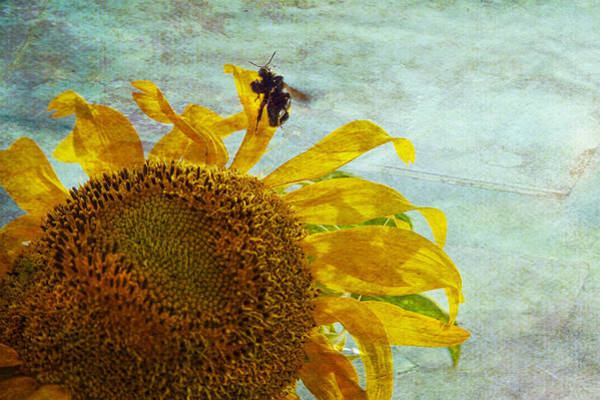 Bee On Flower Wall Art - Photograph - Daydreaming by Toni Hopper