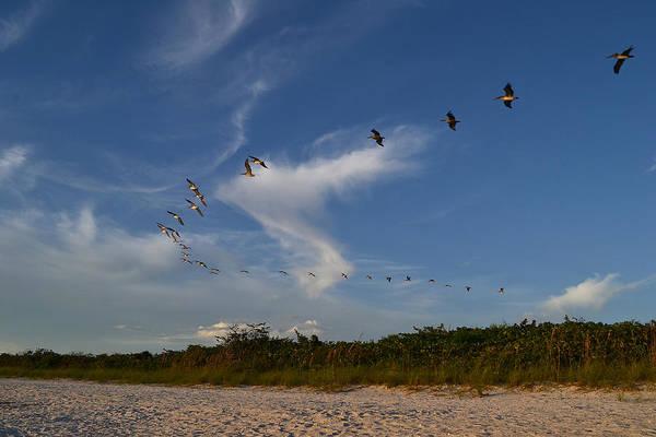 Photograph - Daylight Whispers by Melanie Moraga