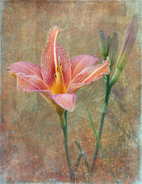 Peachy Wall Art - Photograph - Daylily by Angie Vogel