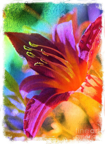 Photograph - Daylily Delight by Carol Groenen