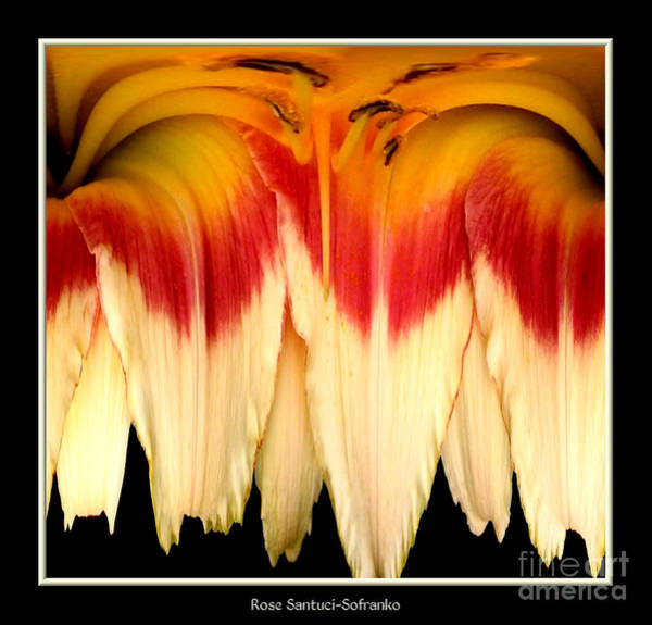 Photograph - Daylily Flower Abstract 2 by Rose Santuci-Sofranko
