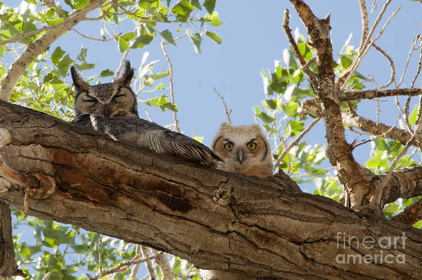Lula Wall Art - Photograph - Daytime Roost by Lula Adams