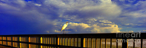 Daytona Beach Rail Bird Sun Glow Pier  Art Print