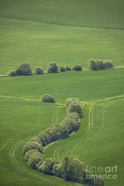 English Countryside Photograph - Dazzling Green by Evelina Kremsdorf