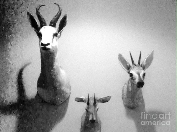 Photograph - Dead Animals..not Trophies by WaLdEmAr BoRrErO