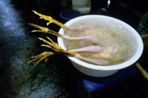 Chicken Feet Photograph - Dead Chicken On Ice At Marketplace by Rich Wheater
