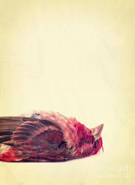 Photograph - Dead by Edward Fielding