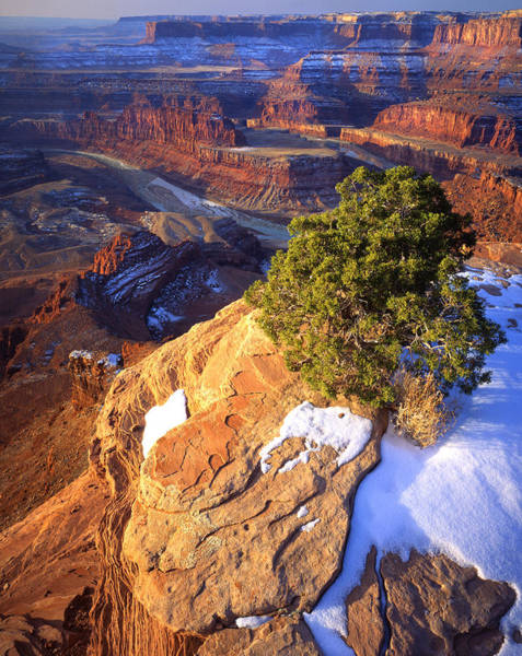 Photograph - Dead Horse Point by Ray Mathis