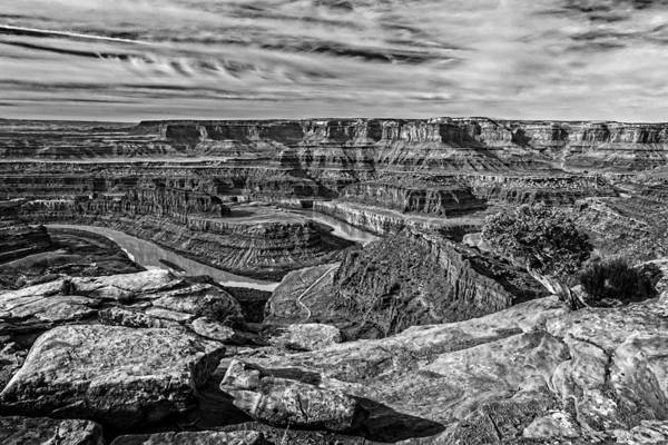 Photograph - Dead Horse Point Tree In Black And White by Wes and Dotty Weber