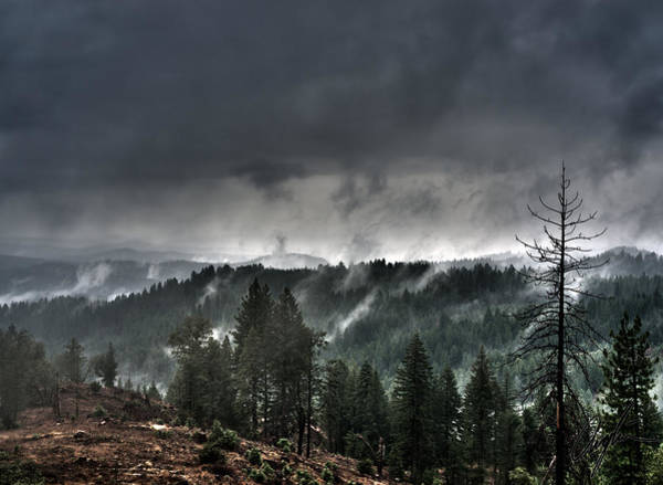 Anglin Wall Art - Photograph - Dead Pine And Foggy Friends by Nathan Anglin