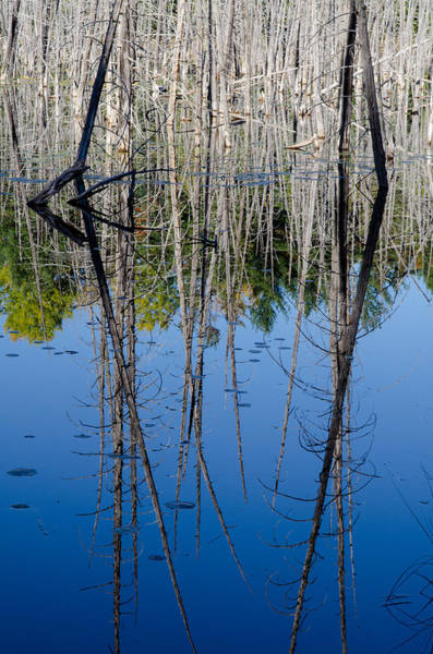 Photograph - Dead Reflections. by Rob Huntley