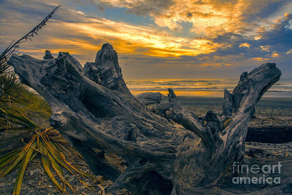 Wall Art - Photograph - Dead Tree At Sunset by Sheila Smart Fine Art Photography