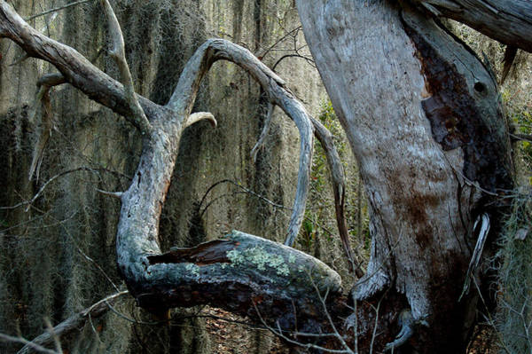 Wall Art - Digital Art - Dead Tree by Fred Leavitt