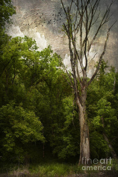 Wall Art - Photograph - Dead Tree by Lena Auxier