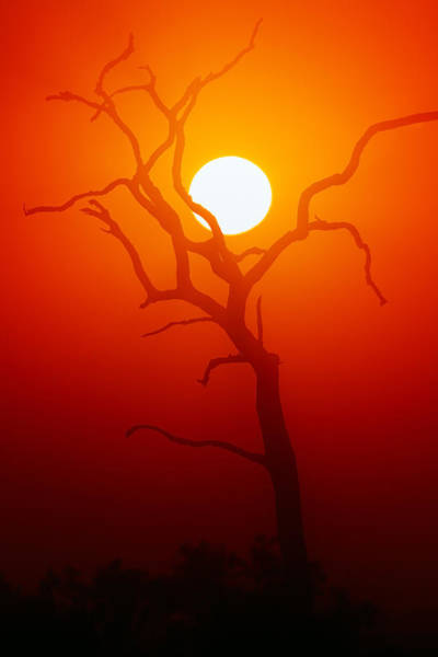 Wall Art - Photograph - Dead Tree Silhouette And Glowing Sun by Johan Swanepoel