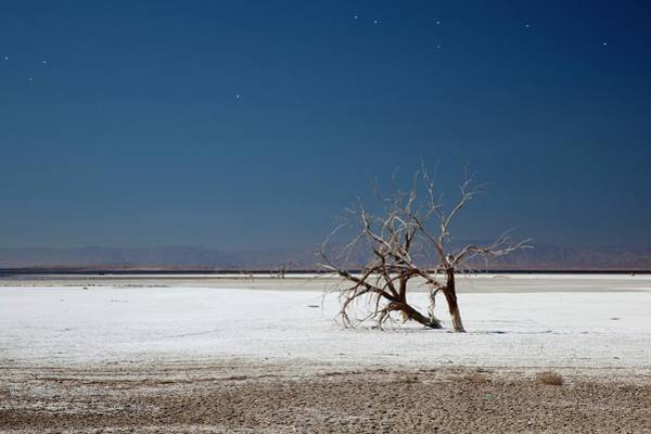 Sonny Bono Wall Art - Photograph - Dead Trees On Salt Flat by Jim West