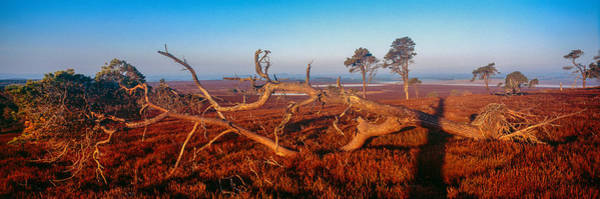 Southern Uplands Wall Art - Photograph - Dead Trees, Southern Uplands by Panoramic Images