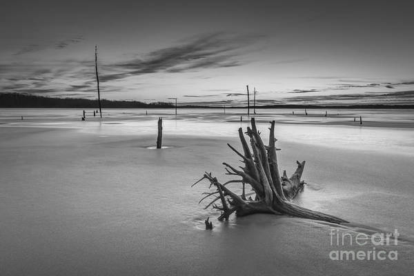D800 Photograph - Dead Wood Bw by Michael Ver Sprill