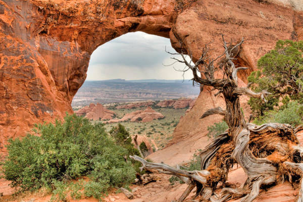 Photograph - Dead Wood By The Arch. Arches National Park Utah. by Rob Huntley
