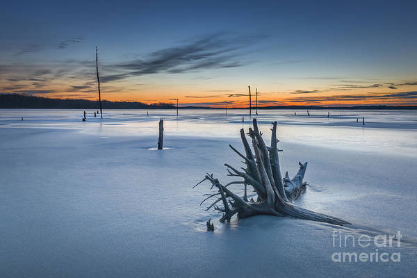 D800 Photograph - Dead Wood  by Michael Ver Sprill