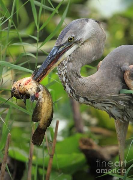 Photograph - Deadly Beak by Adam Jewell